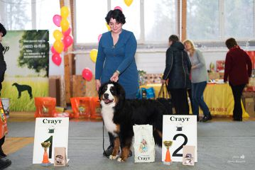 класс юниоров excellent, 1 place, CW, JunCAC, Best Junior!!! BOB!!! BIG-II!!!